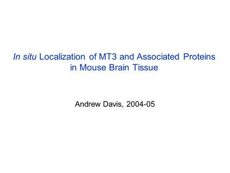 In situ Localization of MT3 and Associated Proteins in Mouse Brain Tissue Andrew Davis, 2004-05.