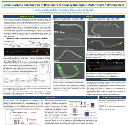 Genetic Screen and Analysis of Regulators of Sexually Dimorphic Motor Neuron Development Jack Timmons, Esther Liu, Zachary Palchick, Sonya Krishnan, and.