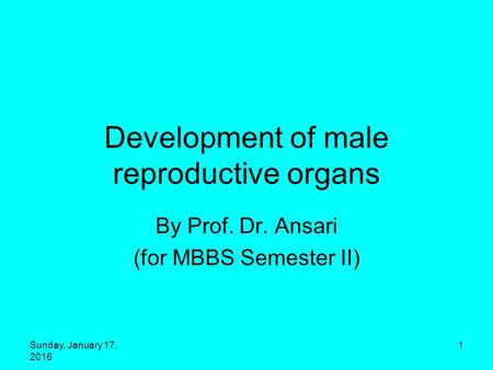 Development of male reproductive organs