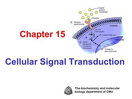 Chapter 15 Cellular Signal Transduction The biochemistry and molecular biology department of CMU.