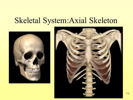 7-1 Skeletal System:Axial Skeleton. 7-2 The Complete Skeleton Axial skeleton –Skull –Hyoid bone –Vertebral column –Thoracic (rib) cage Appendicular skeleton.