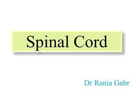 Spinal Cord Dr Rania Gabr. Objectives Describe the gross anatomical features of the spinal cord. Describe the level of the different spinal segments comparing.