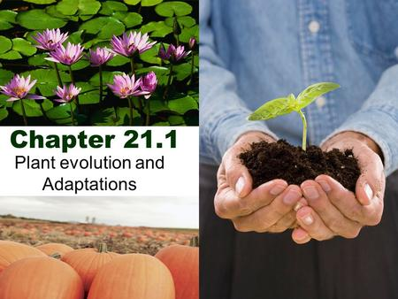 Chapter 21.1 Plant evolution and Adaptations. Plant Characteristics  Multicellular  Autotrophic  Eukaryotes  Tissues and organs.