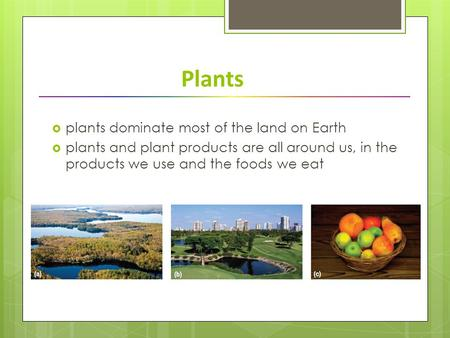 Plants  plants dominate most of the land on Earth  plants and plant products are all around us, in the products we use and the foods we eat.