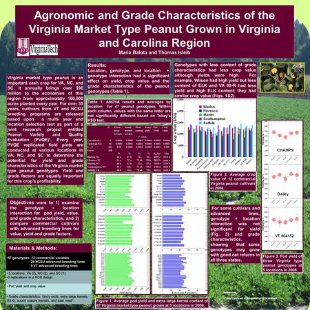 Agronomic and Grade Characteristics of the Virginia Market Type Peanut Grown in Virginia and Carolina Region Maria Balota and Thomas Isleib Objectives.