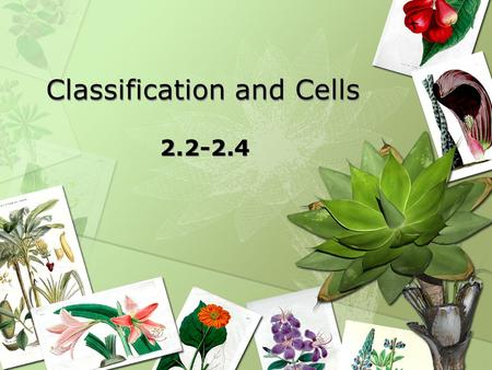 Classification and Cells 2.2-2.4. Currently 1.8 million species of living organisms Classifying 15,000/year new species Many species have gone extinct.