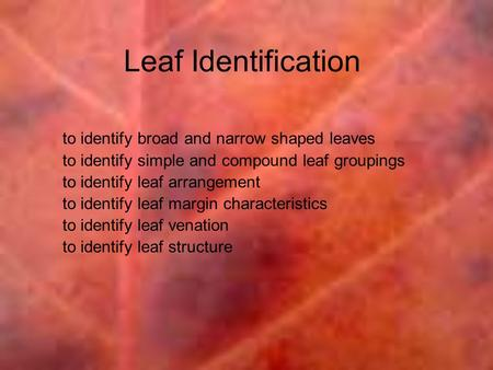 Leaf Identification to identify broad and narrow shaped leaves