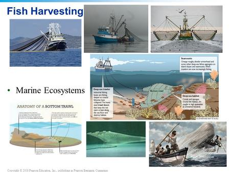 Copyright © 2008 Pearson Education, Inc., publishing as Pearson Benjamin Cummings Fish Harvesting Marine Ecosystems.