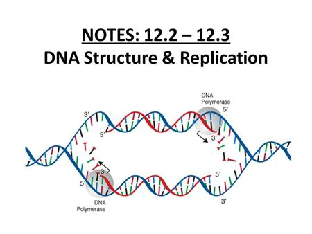 NOTES: 12.2 – 12.3 DNA Structure & Replication 12.2: DNA Structure ● it was known that DNA was made up of nucleotides joined into long strands by covalent.