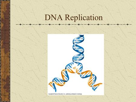 DNA Replication. Nucleotides T.H. Morgan Genes are located on chromosomes.