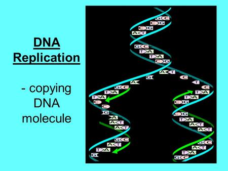 DNA Replication - copying DNA molecule. Why does DNA need to copy? Every time a cell divides (mitosis), an EXACT copy of DNA must go into new cells! Growth.