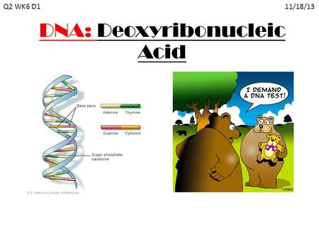 DNA: Deoxyribonucleic Acid Q2 WK6 D1 11/18/13. Scientists of DNA 1953, James Watson & Francis Crick were accredited for discovering the structure of DNA.