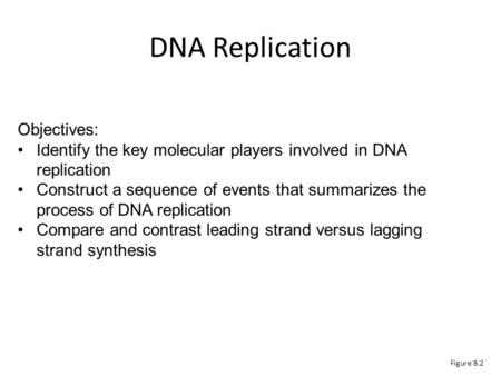 Figure 8.2 Objectives: Identify the key molecular players involved in DNA replication Construct a sequence of events that summarizes the process of DNA.
