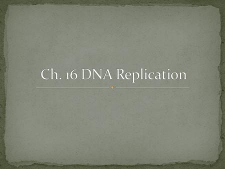 Origins of replication- start cite of DNA replication Replication fork- where the new strand of DNA elongates DNA Polymerase- Elongates the DNA, adds.