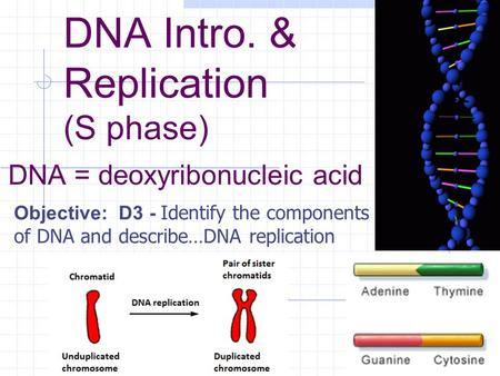 DNA Intro. & Replication (S phase) DNA = deoxyribonucleic acid Objective: D3 - Identify the components of DNA and describe…DNA replication.