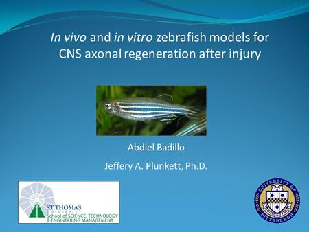 In vivo and in vitro zebrafish models for CNS axonal regeneration after injury Abdiel Badillo Jeffery A. Plunkett, Ph.D.