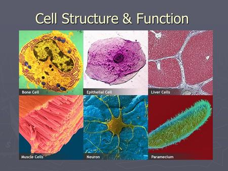 Cell Structure & Function. Cells ► All living things on Earth are made of cells. ► Cells are the basic unit of structure & function in living things.