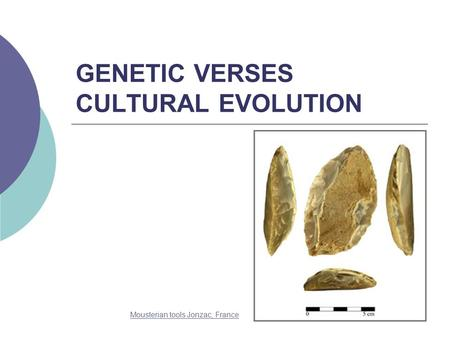 GENETIC VERSES CULTURAL EVOLUTION Mousterian tools Jonzac, France.