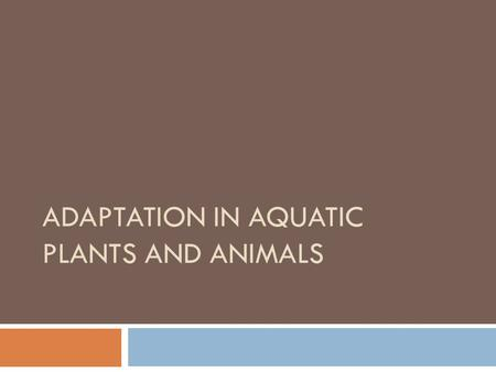 ADAPTATION IN AQUATIC PLANTS AND ANIMALS