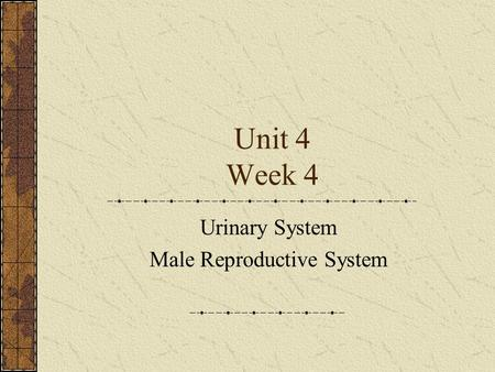 Unit 4 Week 4 Urinary System Male Reproductive System.