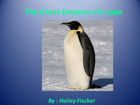 The Great Emperor Penguin By : Hailey Fischer. General Information My animal is a bird. The scientific name is Aptenodytes forstieri. The life span of.