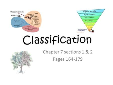 Classification Chapter 7 sections 1 & 2 Pages 164-179.