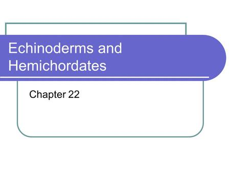 Echinoderms and Hemichordates Chapter 22. Phylum Echinodermata Echinoderms include sea stars, brittle stars, sea urchins, crinoids, sea cucumbers. Entirely.