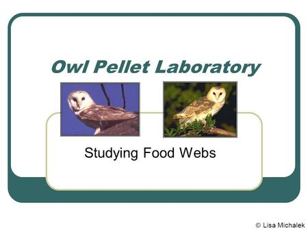 Owl Pellet Laboratory Studying Food Webs © Lisa Michalek.