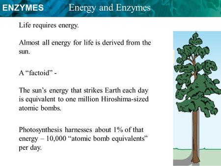 "ENZYMES Energy and Enzymes Almost all energy for life is derived from the sun. Life requires energy. A ""factoid"" - The sun's energy that strikes Earth."