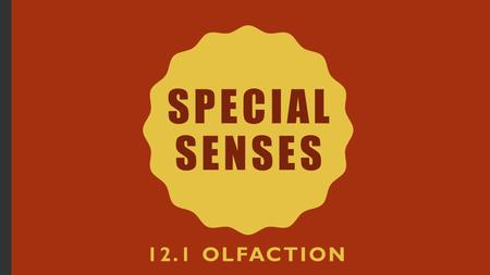 Special Senses 12.1 Olfaction.