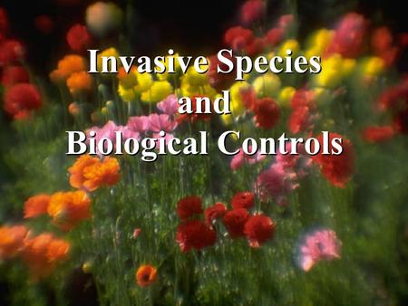 Invasive Species and Biological Controls