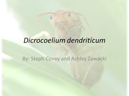 Dicrocoelium dendriticum By: Steph Covey and Ashley Zawacki.