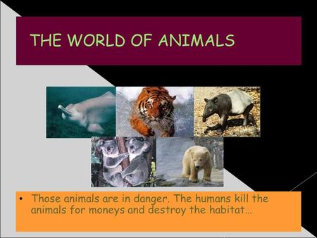 THE WORLD OF ANIMALS Those animals are in danger. The humans kill the animals for moneys and destroy the habitat…
