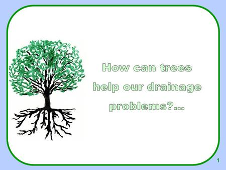 1. 2 265 litres a day! How much water does a tree use? How many days would it take you to drink as much as a tree does in a day? Most people just drink.