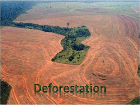 What is deforestation? Deforestation is the removal of trees in forests around the world Many reasons for deforestation More room for agriculture Logging.