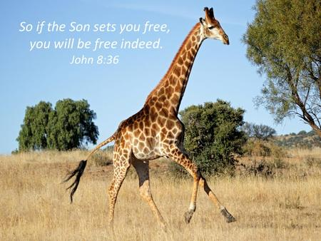 So if the Son sets you free, you will be free indeed. John 8:36.