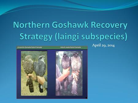 April 29, 2014. Overview History of planning Schedule for Recovery Strategy Issues of Concern to Operations.