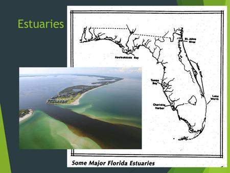 Estuaries. Coastal Ecosystems  Highly productive  Nutrient-rich  Ample sunlight  Shelter.