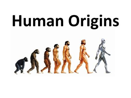 Human Origins. Common argument against human evolution… If we evolved from chimpanzees, how are there still chimpanzees!?