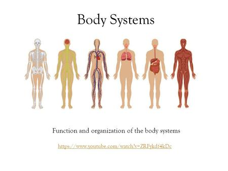Body Systems Function and organization of the body systems https://www.youtube.com/watch?v=ZRFykdf4kDc.