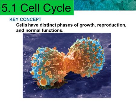 5.4 Asexual Reproduction KEY CONCEPT Cells have distinct phases of growth, reproduction, and normal functions. 5.1 Cell Cycle.