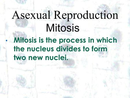 1 1 Asexual Reproduction Mitosis Mitosis is the process in which the nucleus divides to form two new nuclei.
