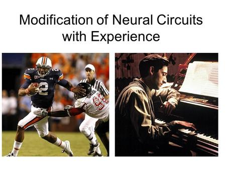 Modification of Neural Circuits with Experience. Experience gained… In utero Development Adulthood –By experience, we mean changes in the chemical and.