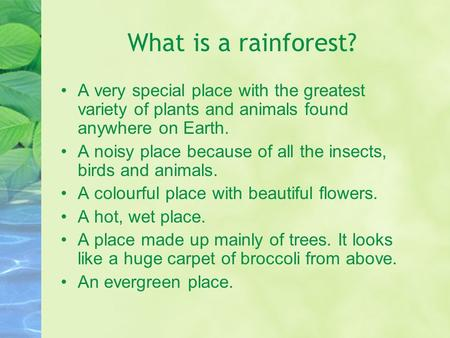 What is a rainforest? A very special place with the greatest variety of plants and animals found anywhere on Earth. A noisy place because of all the insects,