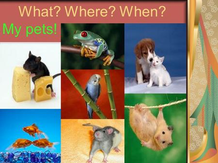 What? Where? When? My pets!. What is it? 1) a kitten; 2) a lizard; 3) a puppy; 4) a tortoise; 5) a hamster; 6) a guinea pig.