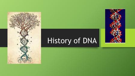 History of DNA Scientific history The journey to understanding that DNA is our genetic material T.H. Morgan (1908) Frederick Griffith (1928) Avery, McCarty,