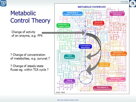 Metabolic Control Theory