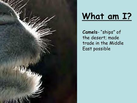 "What am I? Camels- ""ships"" of the desert; made trade in the Middle East possible."