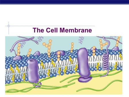 AP Biology 2010-2011 The Cell Membrane Gr.12 Biology Overview  Cell membrane separates living cell from nonliving surroundings  thin barrier = 8nm.