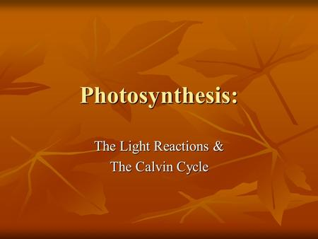 Photosynthesis: The Light Reactions & The Calvin Cycle.